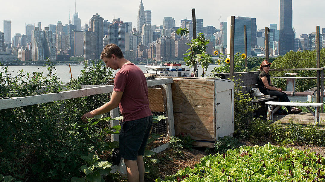 Eagle Street Rooftop farm, Greenpoint. Brooklyn. Over hønseburet har man utsikt over East River og Manhattans skyline. Foto: Are Carlsen